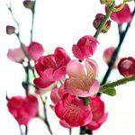 nota-olfattiva-Fiore di Prugno