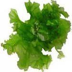 nota-olfattiva-Alghe