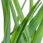 nota-olfattiva-Amyl Salicylate