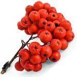 nota-olfattiva-Bacche rosse