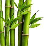 nota-olfattiva-Bambù