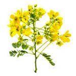 nota-olfattiva-Cassia