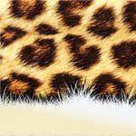 nota-olfattiva-Note animalesche