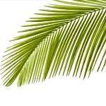 nota-olfattiva-Palma