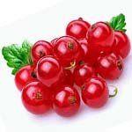 nota-olfattiva-Ribes Rosso