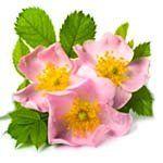 nota-olfattiva-Rosa Canina