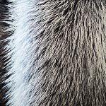 nota-olfattiva-Muschio bianco