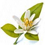 nota-olfattiva-Fiore di limone