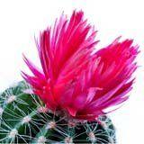 nota-olfattiva-Fiore di Cactus