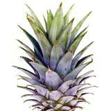 nota-olfattiva-Foglia di Ananas