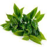 nota-olfattiva-Tè verde