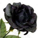 nota-olfattiva-Rosa Nera