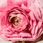 Her - Burberry - Foto 4