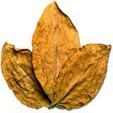 nota-olfattiva-Foglie di Tabacco