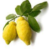 nota-olfattiva-Limone di Amalfi