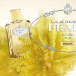 Infusion de Mimosa - Prada - Foto 4