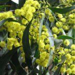 Mimosa Pour Moi - L'Artisan Parfumeur - Foto 4
