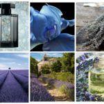 Bucoliques de Provence - L'Artisan Parfumeur - Foto 3