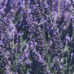 Bucoliques de Provence - L'Artisan Parfumeur - Foto 4