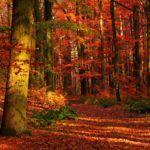 Lankaran Forest - Maria Candida Gentile - Foto 4